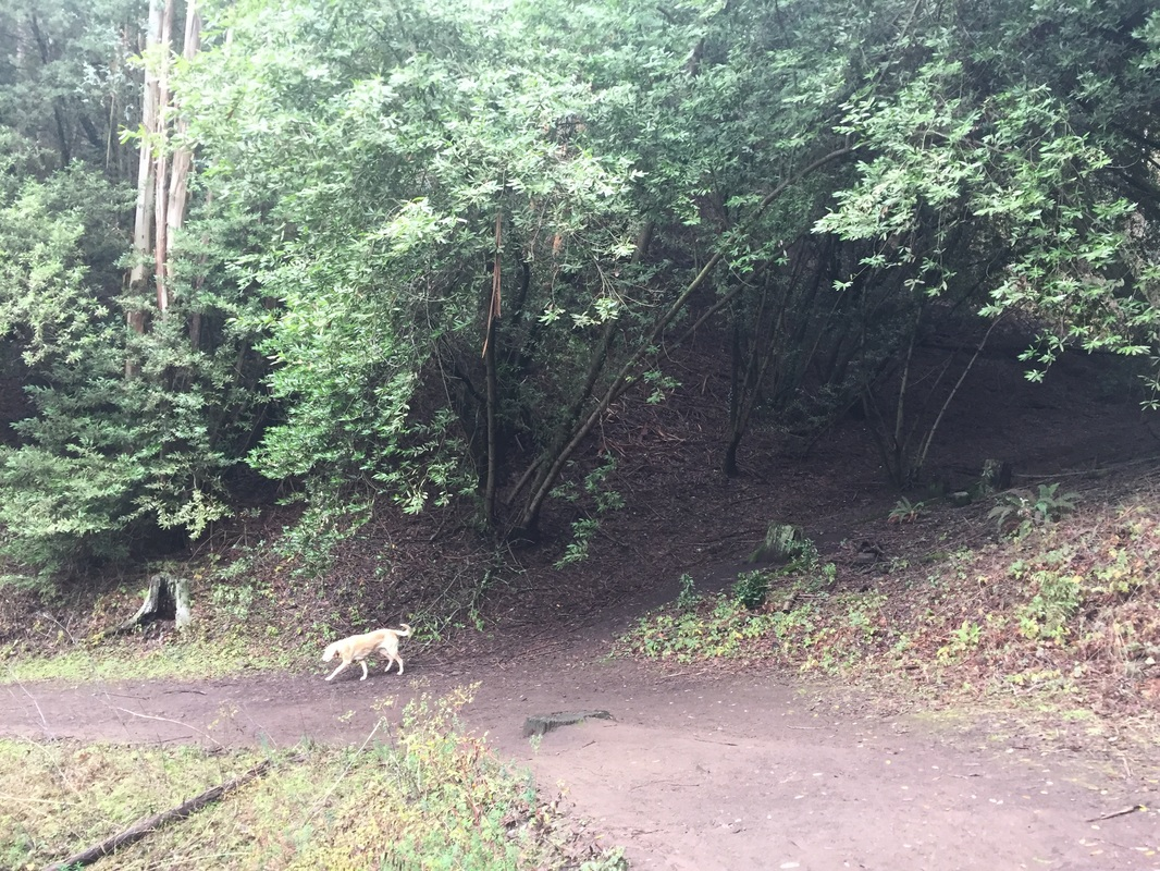 Tilden Park Hikes With Dogs