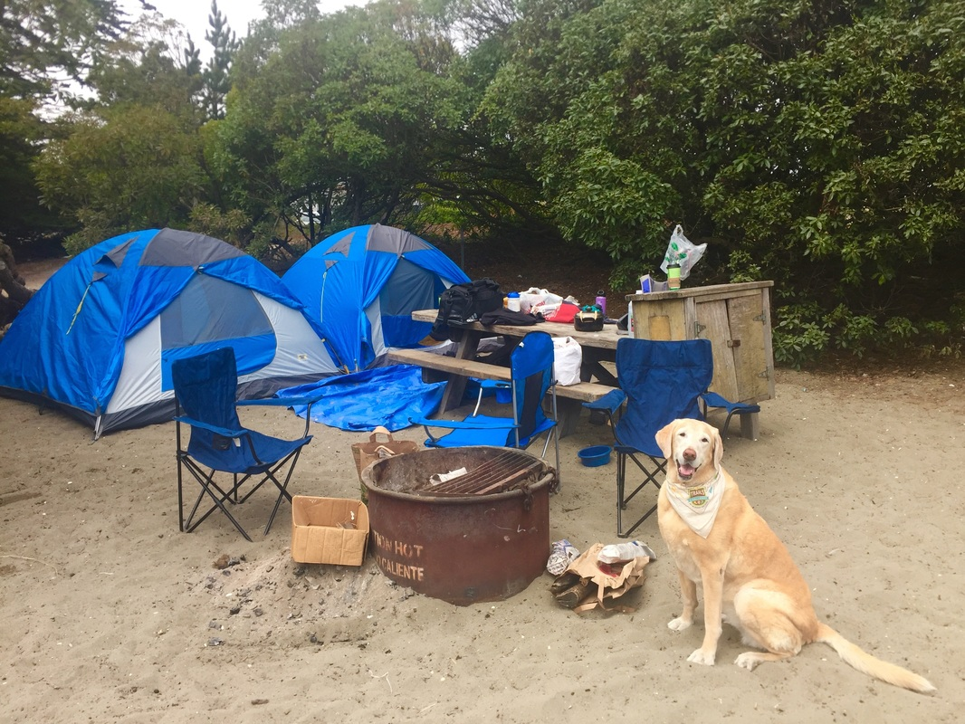 Click here to reserve a c&site on the Sonoma County C&ing website : beach tent for dogs - memphite.com