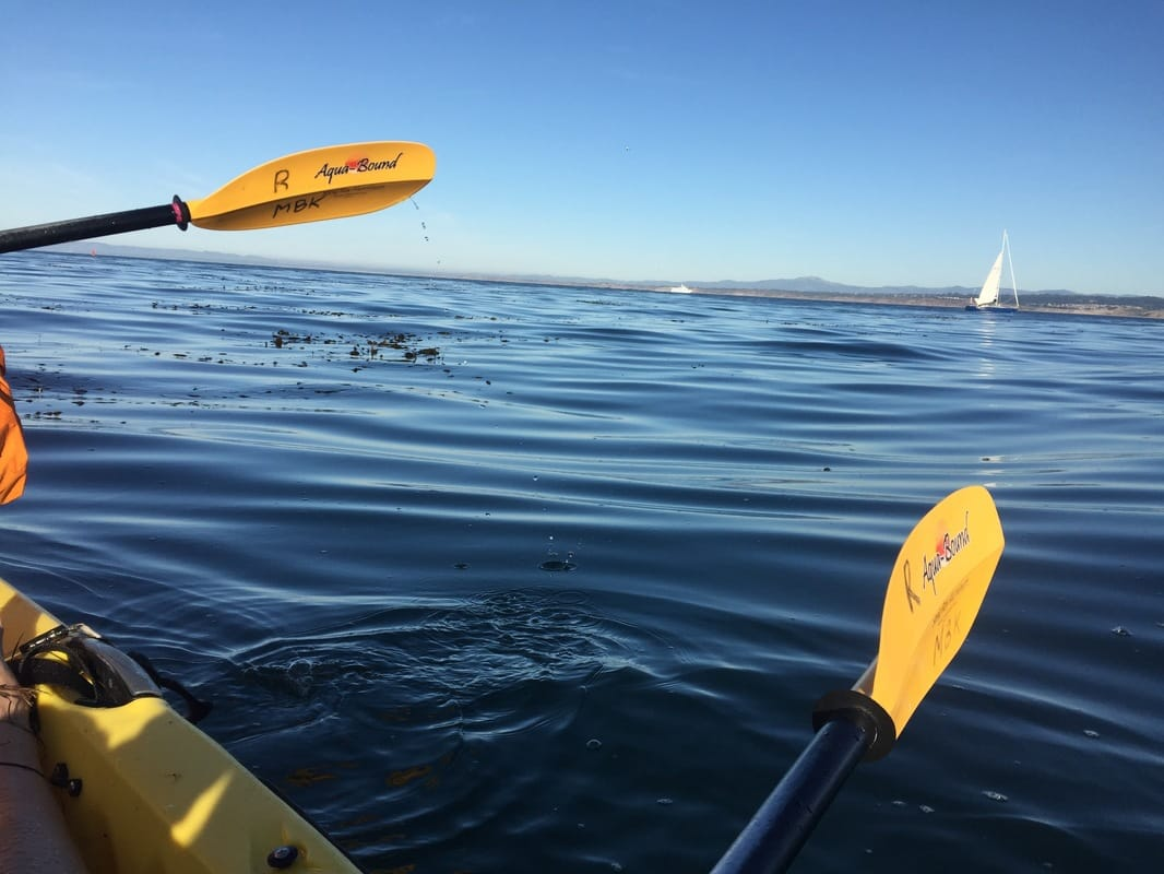 1c372c1f61 Click here for more info on Monterey Bay Kayaks